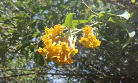 ces quelques fleurs de nos jardins Rps20376