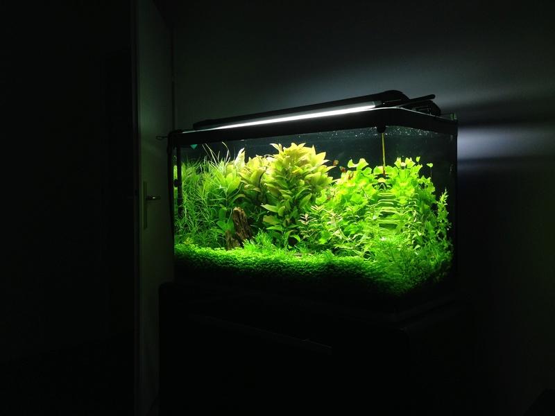 Réfection et bouturage des plantes  Img_2039