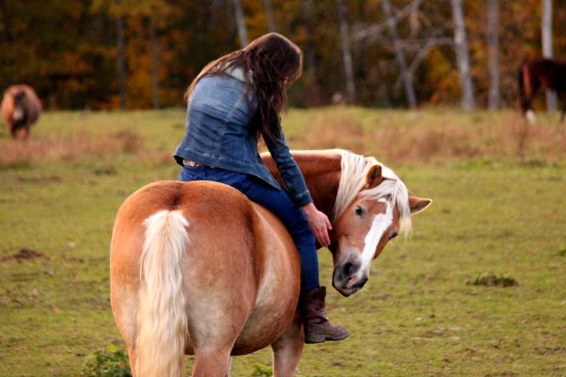 L'équitation sans mors - Page 4 Img_5110