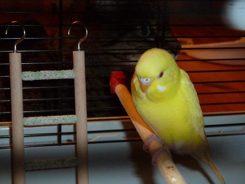 idée des sexes et des âges de mes oiseaux? P1140817