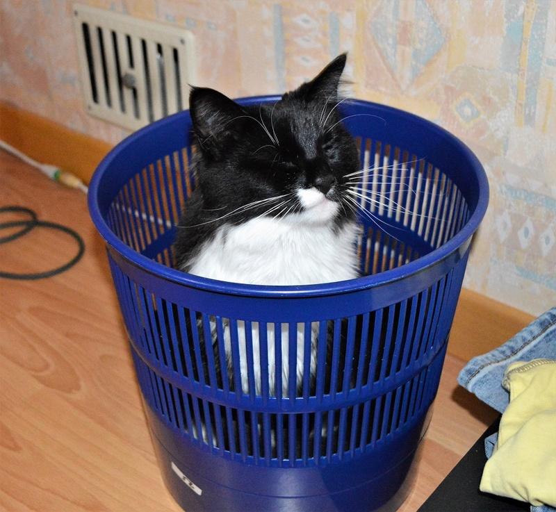 moumousse - MOUMOUSSE, chaton mâle noir et blanc à poils mi longs, né le 05.04.16 Dsc_0030