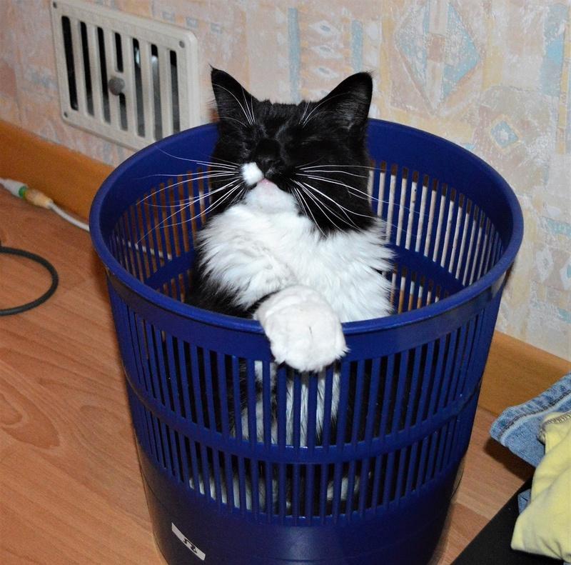 moumousse - MOUMOUSSE, chaton mâle noir et blanc à poils mi longs, né le 05.04.16 Dsc_0033