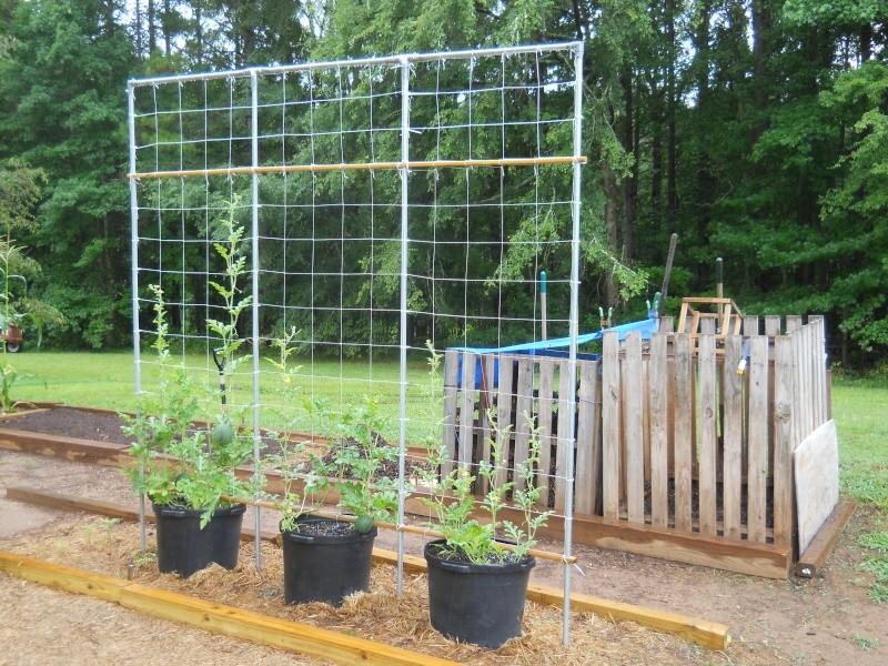 Garden Plan for 2014 Dscn0113