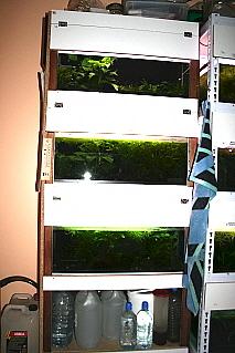 projet fishroom Etagyr11