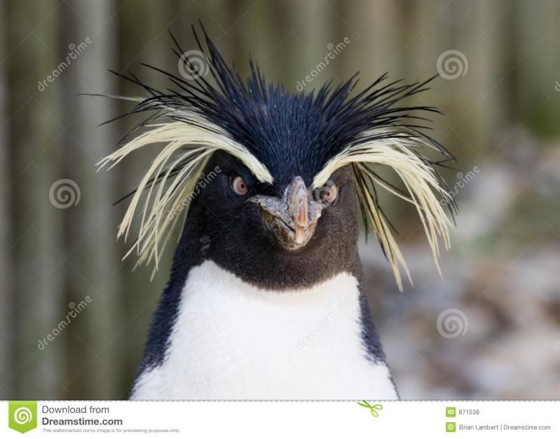 Un Pinguins à l'eau !! \o/ Pingou12