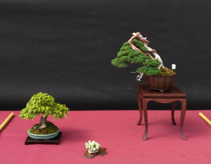 Oltre Il Verde - Bonsai Competition 6 Compos10