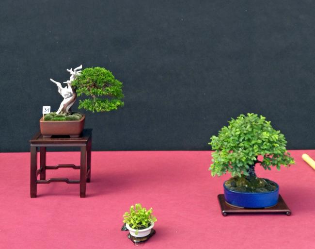 Oltre Il Verde - Bonsai Competition 6 Compos11