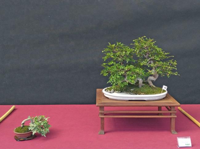Oltre Il Verde - Bonsai Competition 6 Compos12