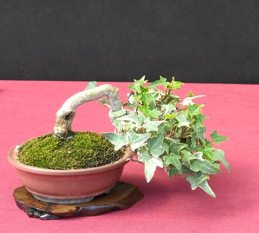 Oltre Il Verde - Bonsai Competition 6 Compos13