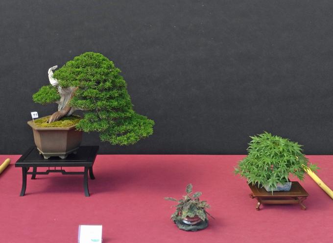 Oltre Il Verde - Bonsai Competition 6 Compos15