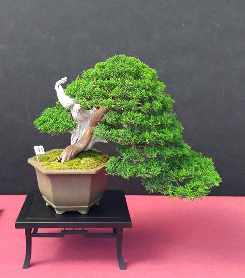 Oltre Il Verde - Bonsai Competition 6 Compos17