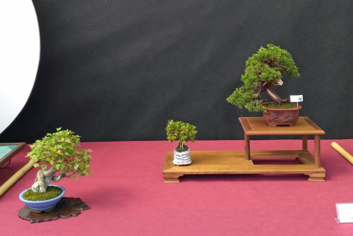 Oltre Il Verde - Bonsai Competition 6 Compos18