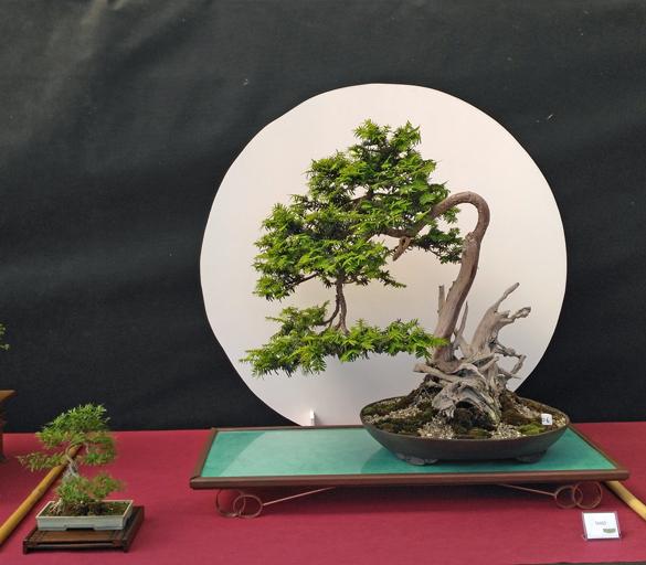 Oltre Il Verde - Bonsai Competition 6 Compos22
