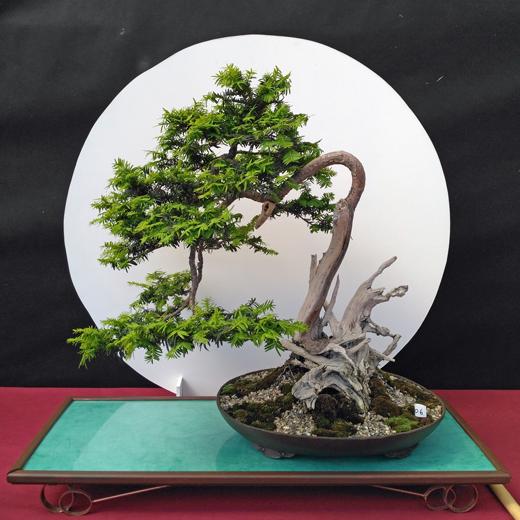 Oltre Il Verde - Bonsai Competition 6 Compos23