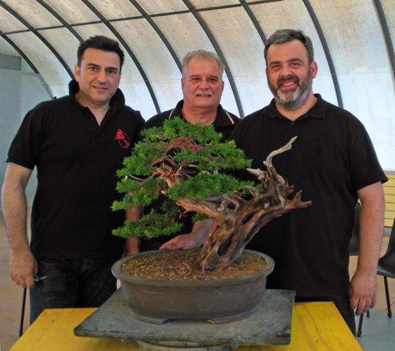 Oltre Il Verde - Bonsai Competition 6 Fine-l11