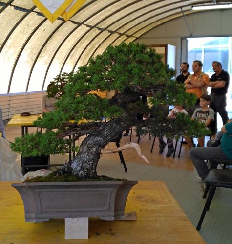 Oltre Il Verde - Bonsai Competition 6 Fine-l12