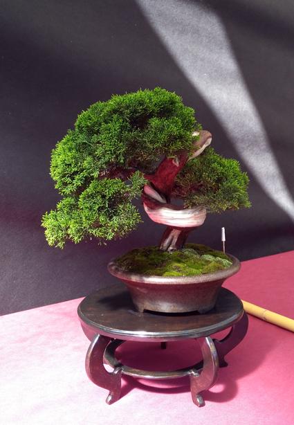 Oltre Il Verde - Bonsai Competition 6 Ginepr10