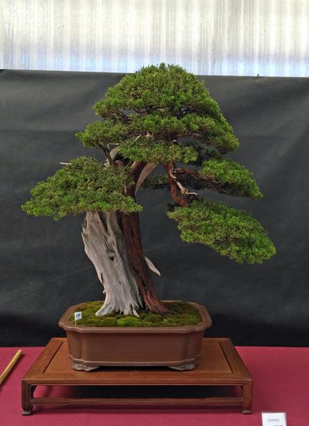Oltre Il Verde - Bonsai Competition 6 Ginepr11