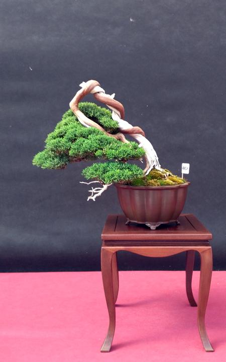 Oltre Il Verde - Bonsai Competition 6 Junipe12
