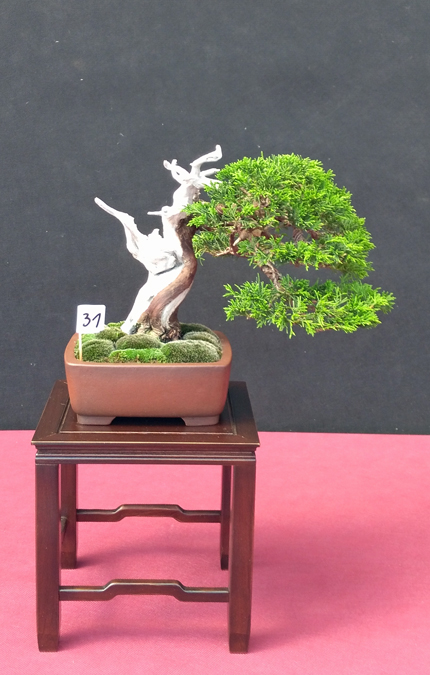 Oltre Il Verde - Bonsai Competition 6 Junipe13