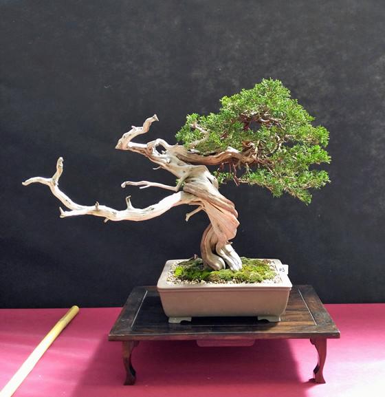 Oltre Il Verde - Bonsai Competition 6 Junipe21