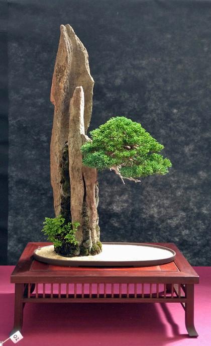 Oltre Il Verde - Bonsai Competition 6 Junipe22