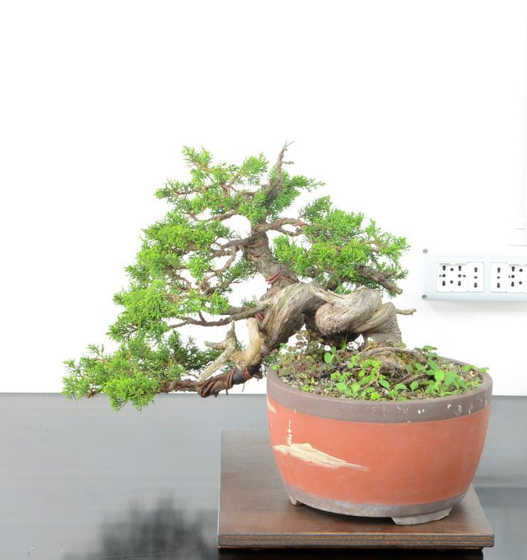 Itoigawa-PF Lato-s16