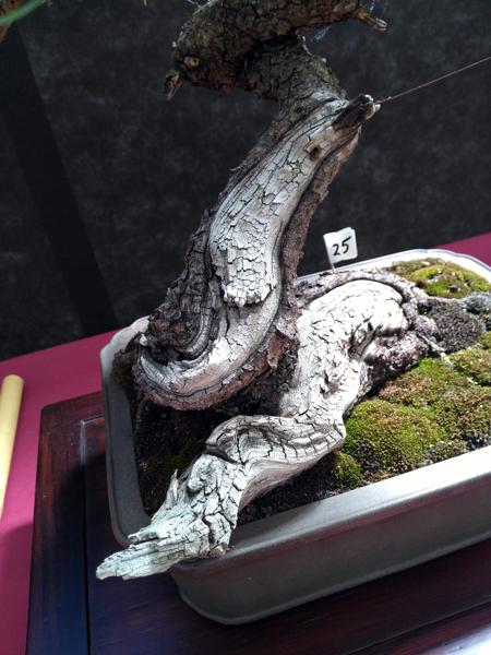 Oltre Il Verde - Bonsai Competition 6 Secco-10