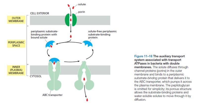 ABC transporters Abc_tr12