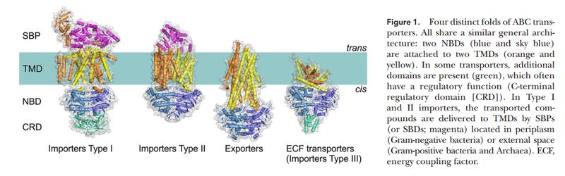 ABC transporters Abc_tr13