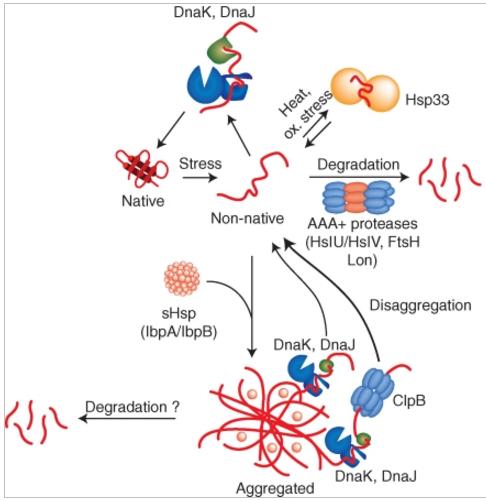 Homeostasis  in cells, and origin of life scenarios Activi10