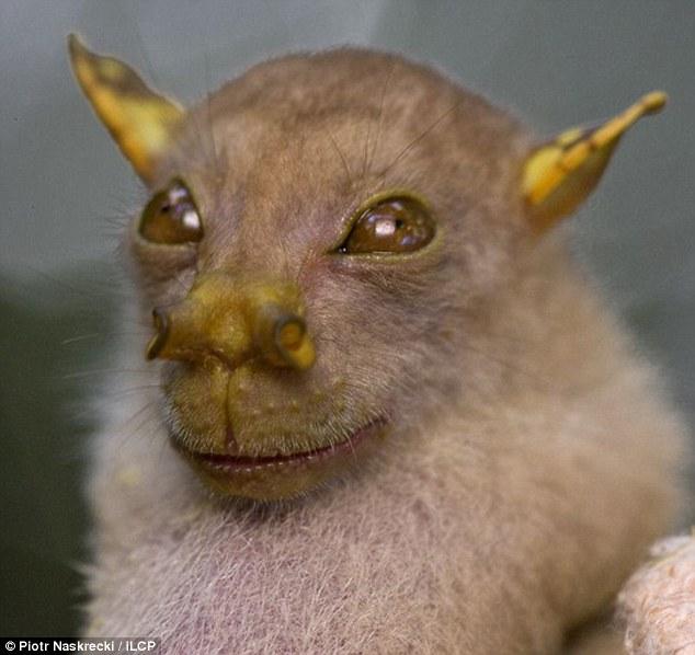 Spectacular bats Articl10