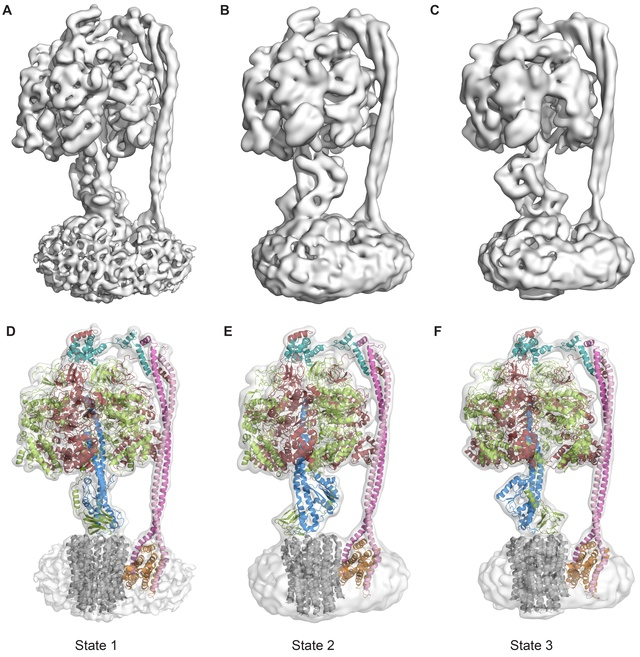The irreducibly complex ATP Synthase nanomachine, amazing evidence of design Atp_sy10