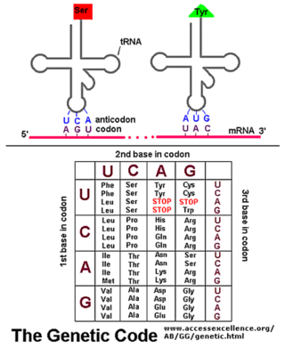 Origin of  translation of the 4 nucleic acid bases and the 20 amino acids, and the universal assignment of codons to amino acids Bolo_b10