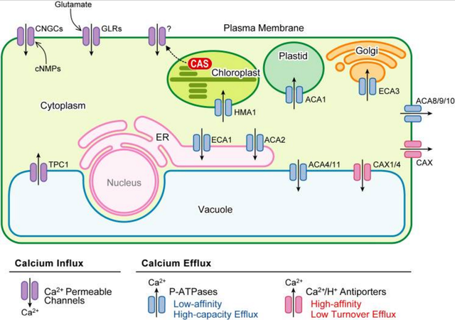 How intracellular Calcium signaling,  gradient and its role as a universal intracellular regulator points to design Ca2_in10
