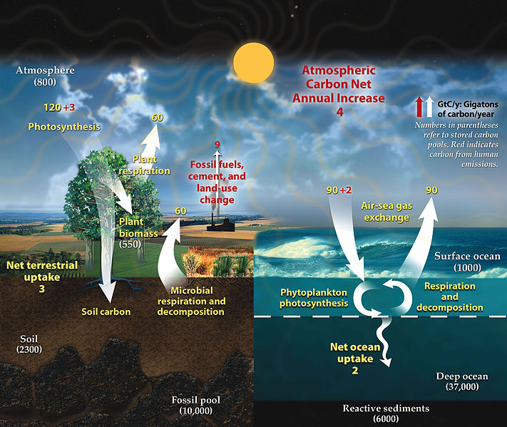 The finely tuned carbon cycle,  essential for life Carbon10