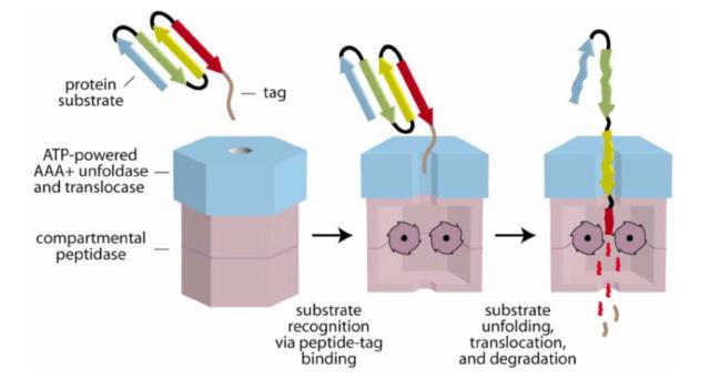 Homeostasis  in cells, and origin of life scenarios Cartoo10