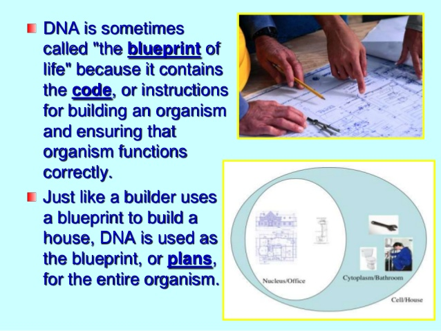 DNA - the instructional  blueprint of life Dna_bl10