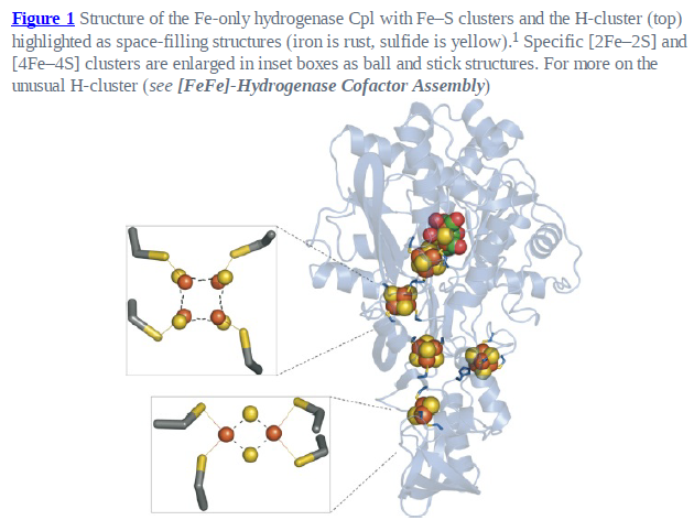 Iron-sulfur clusters: Basic building blocks for life  Fe-s_c10