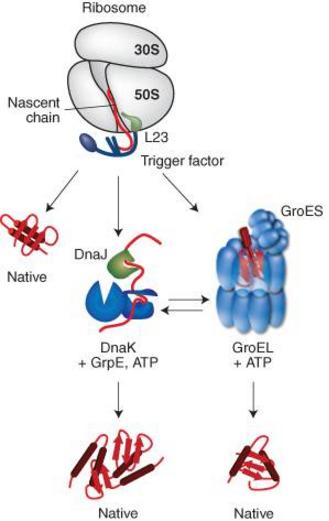 Homeostasis  in cells, and origin of life scenarios Interp10