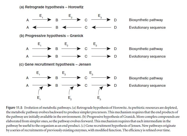 Methabolic pathways, a major headage for evolution Methab10