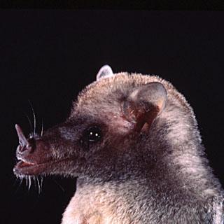Spectacular bats Mexbat10