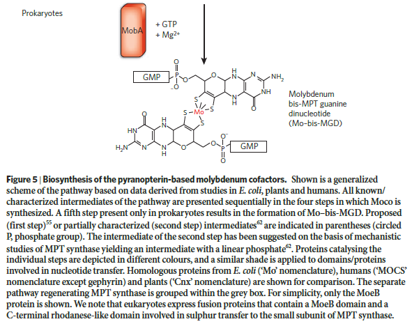 Molybdenum, essential for life Molybd12