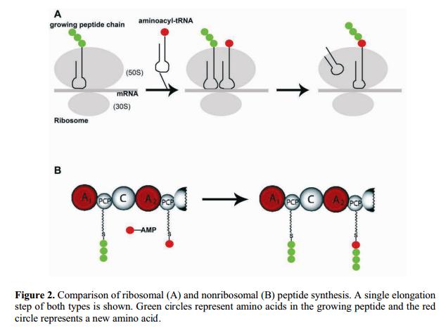 Iron Uptake and Homeostasis in Prokaryotic Microorganisms Non-ri12
