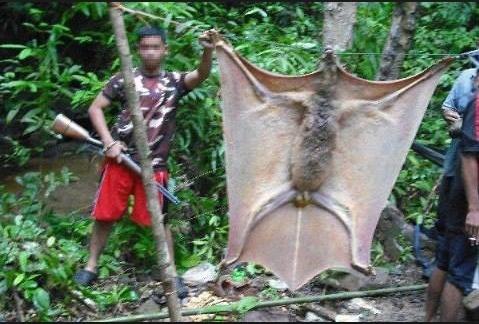 Spectacular bats Rare_a10