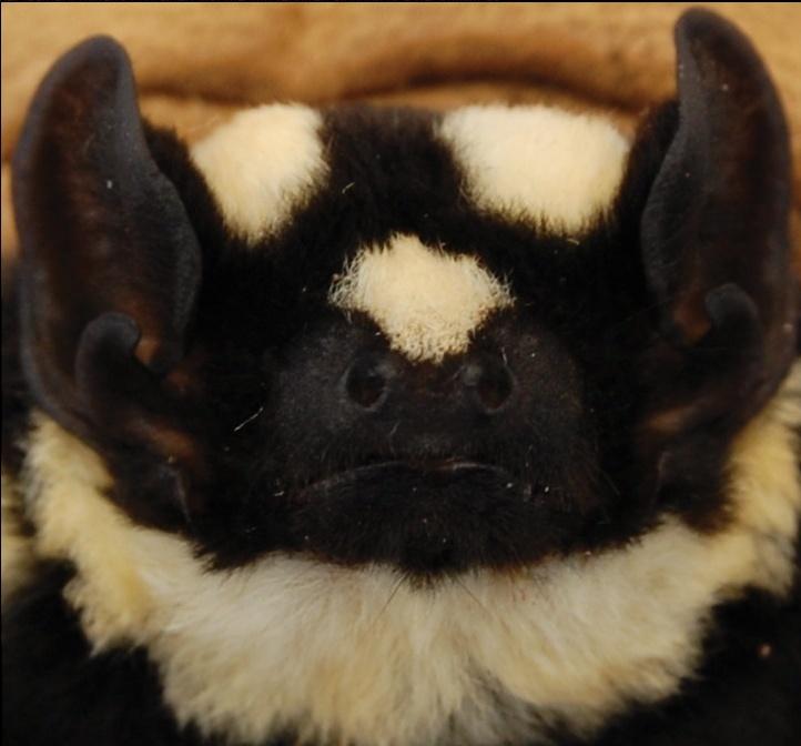 Spectacular bats Real_m14