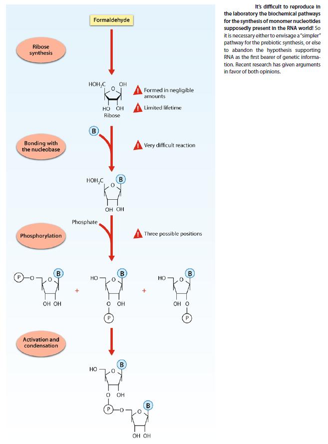 The RNA world, and the origins of life Rna_bi11