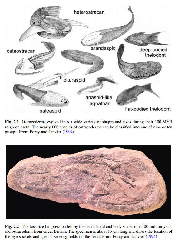 Evolution of fish Yeahyo10