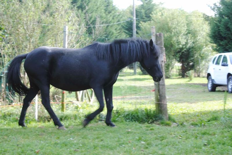 CHARLIE - ONC poney née en 1999 - adoptée en janvier 2013 par mammiemitsou - Page 2 1110