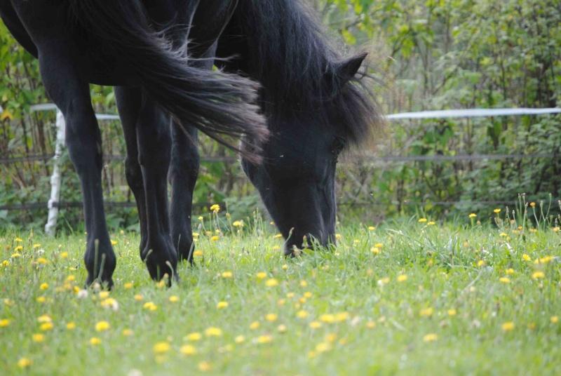 CHARLIE - ONC poney née en 1999 - adoptée en janvier 2013 par mammiemitsou - Page 2 710